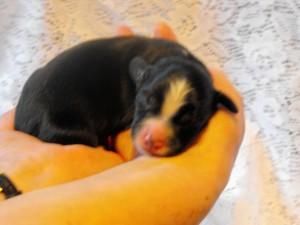 puppy2Apollo24hrs