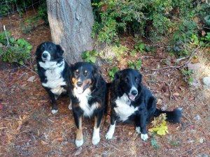 Sheba, Tucker Roxie 2012