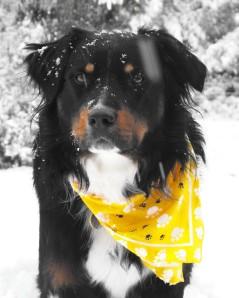 Tucker in the snow Dec. 2008