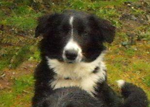 Sheba 6 months