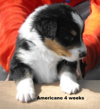 4weeksamericano