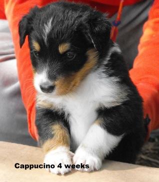 4weekscappucino