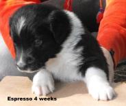 4weeksespresso