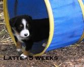 5weeksLatte