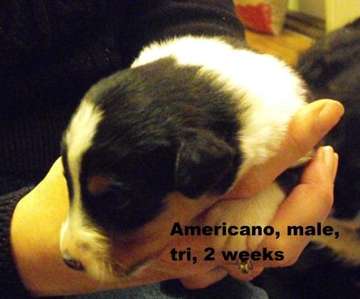 Americano2weeks