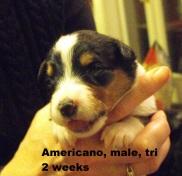 Americano2wks