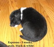 Espresso3weeks