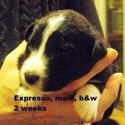 expresso2weeks2jpg