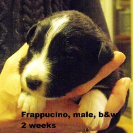 Frappucino2weekspg