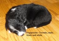 Frappucino3weeks2
