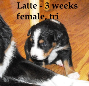 Latte3weeks