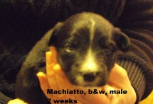 Machiatto2weeks