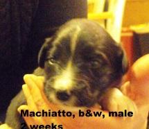 Machiatto2wks