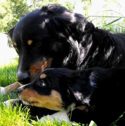 Tucker w/ pup