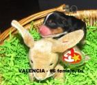 Valencia24hrs